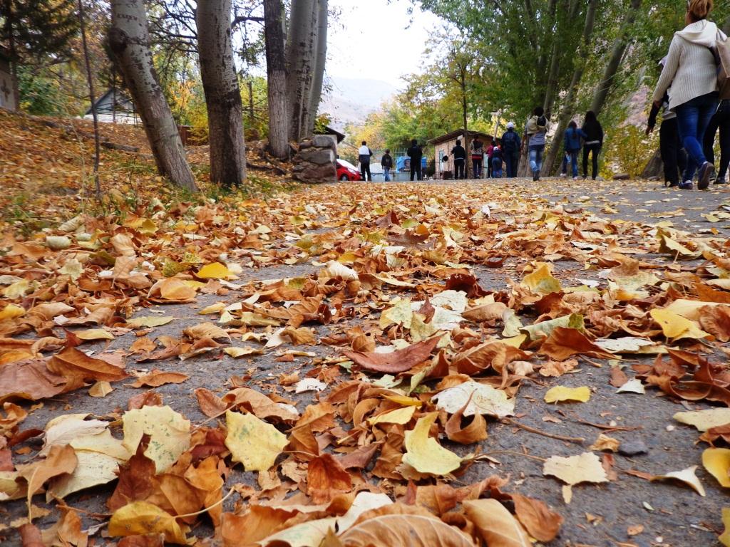Листья желтые нам под ноги ложатся...