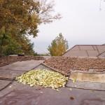 Запасы на зиму. Так сушат орехи, яблоки на крышах своих домов сельские жители